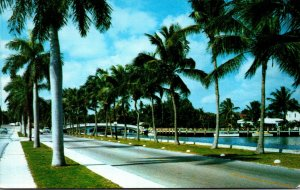 Florida Fort Lauderdale Royal Palms Along Las Olas Boulevard
