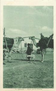 Djibouti depart pour la Brousse ethnic life camels goat