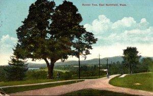 Massachusetts East Northfield The Sunset Tree 1914