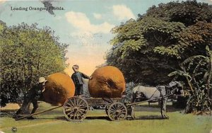 Exageration Post Card Loading Oranges Florida 1916