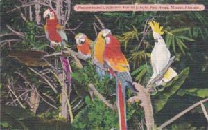 Florida Miami Colorful Macaws & Cockatoo Parrot Jungle Red Road