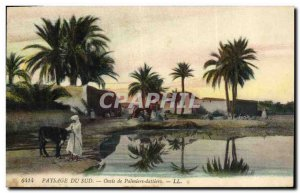 Postcard Old Palm Palm Oasis of date palms