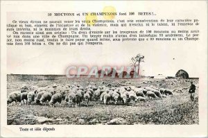 Postcard Old Sheep and A Champenois are 100 Beasts Troyes (Aube)