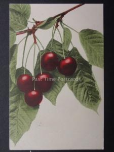 Greeting: Cherries on a branch c1908 by Martin Rommel & Co No 702