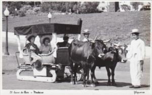 Portugal Madeira Carro de Bois Typical Ox Cart Real Photo