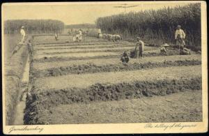 indonesia, Sugar Cane Plantation, Tilling of the Ground (1910s)