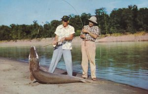WHITE RIVER , Arkansas , 40-60s ; 230 lb. Garfish caught