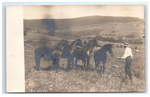 Postcard A Man feeding Four Horses in a field RPPC  D14
