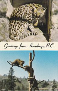 KAMLOOPS, British Columbia, Canada, 1940-1960's; B.C. Wildlife Park