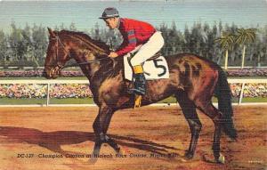 Miami FL Champion Citation Hialeah Horse Race Track Postcard