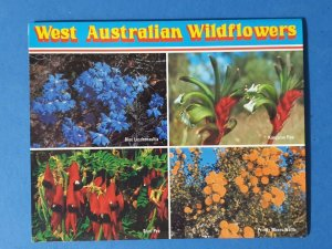 West Australian Wildflowers 1980s Letter Card Lettercard AUO