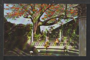 Kapok Tree,Kapok Tree Inn,Clearwater,FL Postcard