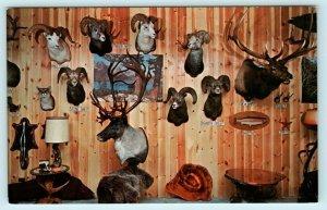 OLIVER, B.C. British Columbia Canada ~ BRAUN'S ART in TAXIDERMY Animals Postcard