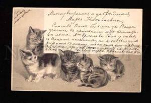 012426 Charming KITTENS w/ Bow Vintage Greeting Embossed PC
