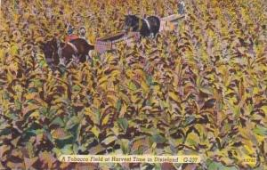 A Tobacco Field At Harvest House In Dixieland