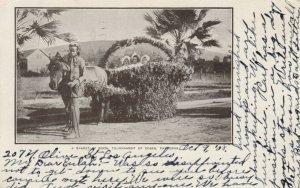 PASADENA , California, 1908 ; Float ; Basket of Buds, Boy & Donkey