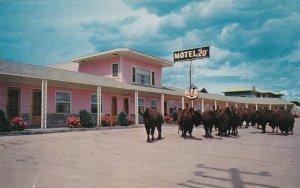 Iowa Moville Motel 20 Buffalo Herd sk6733