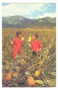 Children, Field Ripe Pineapples...Ready For Canning by Del Monte, Hawaii, 194...
