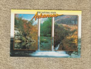 Postcard ARKANSAS The Natural State Buffalo River Unused