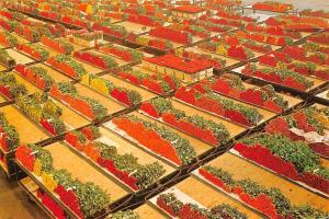 Holland Netherlands Aalsmeer, Cutflower section United Flower Markets