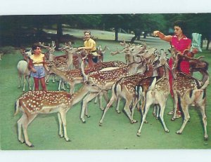 Pre-1980 TOURIST GAME FARM Catskill New York NY AD2326