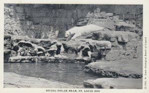 Polar Bears , ST LOUIS Zoo , Missouri , 1930s
