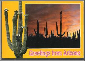 Arizona Greetings Saguaro Cactus - [AZ-081X]