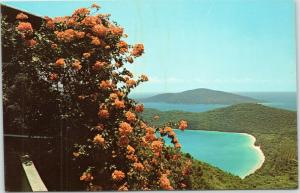Magens Bay  and Bougainvillea, St. Thomas, Virgin Islands