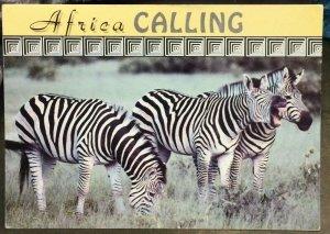 Zimbabwe Zebra Hwange - posted 1994