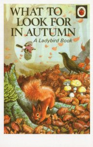 What To Look For In Autumn Squirrel Ladybird 1st Edn Book Postcard