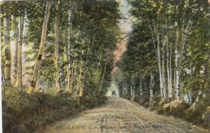 BETHLEHEM , New Hampshire, 1900-10s ; Lover's Lane, Gale River Road; TUCK # 6094