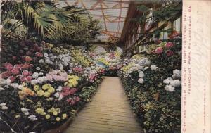 Chrysanthemum Display Horticultural Hall Fairmountian Park Philadelphia Penns...
