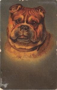 B74136 dog chien animals animaux