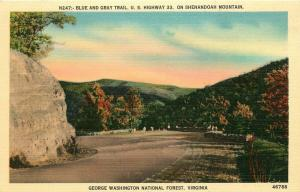 George Washington Nat'l Forest, VA, Blue & Gray Trail, Vintage Postcard d8721