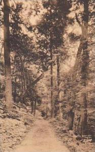 New York Shawangunk Mountains Palmaghatt Drive Albertype