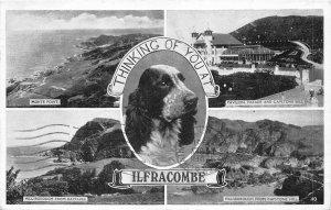 br108662 thinking of you at ilfracombe uk dog