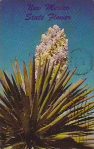 New Mexico Yucca In Bloom