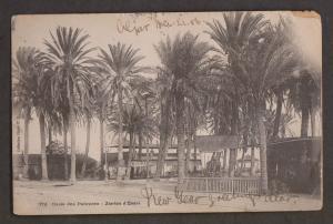 Palmtree Oasis, Jardin d'Essai, Algiers - Used - Tiny Tear & Wear