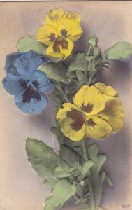 Embossed, Colorful Pansies, 00-10s