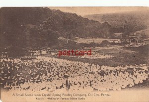 1912 OIL CITY PA Crystal Spring Poultry Co, Raisers, McEvoys Famous Golden Ducks
