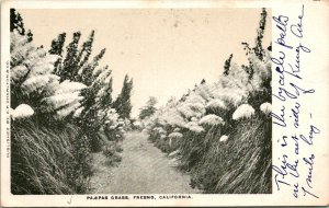 Fresno CA Pampas Grass Field Path Postcard unused 12114