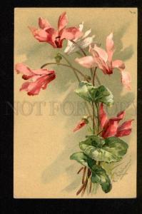 048869 BELLE Pink Wild Flowers VIOLET By C. KLEIN vintage PC