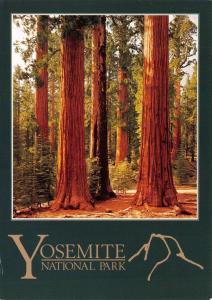Postcard Sequoia Redwoods, Mariposa Grove, Yosemite, California, USA #348