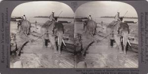 SV: 1910s ; Elephants hauling Teak Logs , MAULMAN , Burma