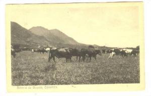 Sabana de Bogota,, Colombia, 1910s