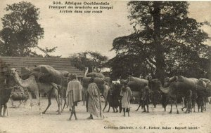 CPA AK Sénégal Afrique 508. Dakar - Fortier - Transport des arachides (70522)