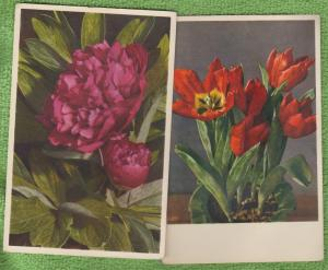 Lot of 2 Floral Flowers Vintage Postcards Tulip / Peony