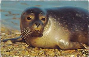 Philip Wayre's Norfolk Wildlife Park, Sweet Young SEAL