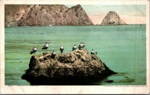 flock of seagulls on a rock waiting for breakfast early postcard view vtg
