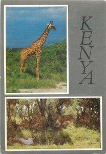 Kenya animal Postcard Giraffe butterfly stamp